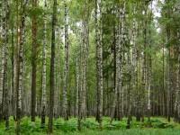 Лес и болото