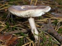 по грибы