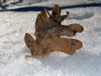 Осень зимой
